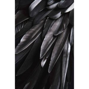 Poster Black wing