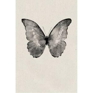 Poster Black Butterfly