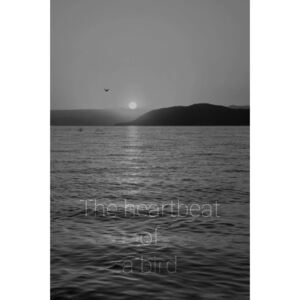 THE HEARTBEAT OF A BIRD B&W poster - A4 (21x30 cm)