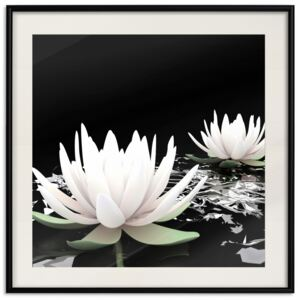Posters: Lotus Flowers [Poster]